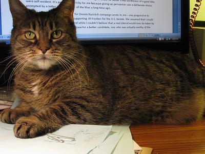 Wilson sitting on my desk.