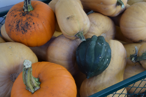 We have a lot of squash to share.